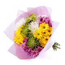Purple, Yellow and White Chrysantimums