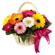 12 Assorted  Gerberas in a Basket