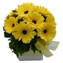 10 Yellow Gerberas in a Box