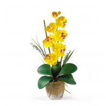 Single Yellow Orchid Plant